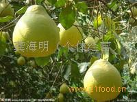 产地优质柚子