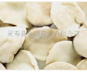 白灵菇鲜品