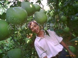 梅县沙田柚