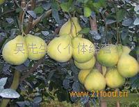 梅州沙田柚