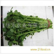 西洋菜种子