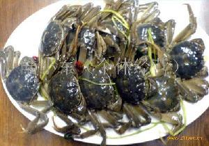 河蟹(母)  75-95g