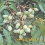 橄榄叶提取物Olive Leaf P.E.