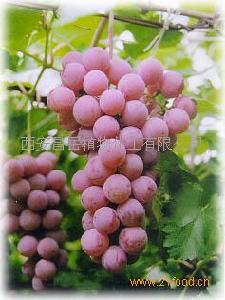 葡萄籽提取物(原花青素)