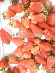 绿色无公害草莓