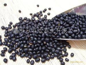 纯天然优质黑豆粉