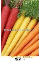 胡萝卜纤维素
