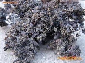 海参专用优质大叶菜(大叶菜粉)