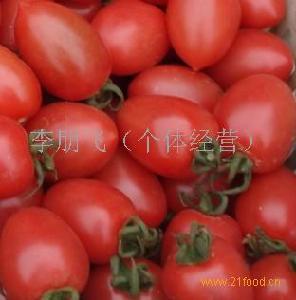 千禧圣女小番茄