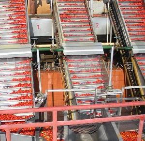 1500吨/天番茄酱生产线,番茄酱设备