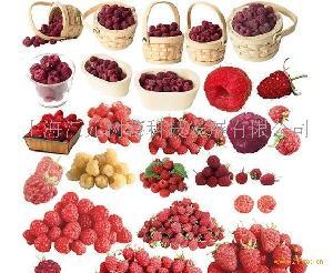 蔓越莓速冻果