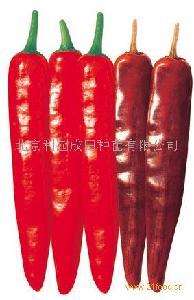 """韩国进口杂交塔椒种子""""金塔王"""""""