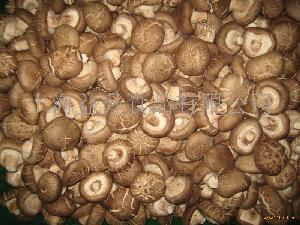 Shiitake香菇