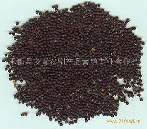 青海油菜籽