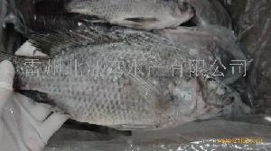 罗非鱼二去tilapia gutted and scaled