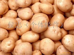 绿色马铃薯