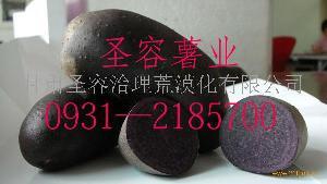 景泰黑土豆