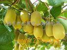 猕猴桃鲜果