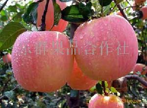 浙江宁波新鲜红富士苹果价格