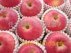 红枣苗 苹果苗桃树苗