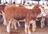 养肉牛$哪里有小黄牛苗牛犊