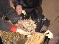 长江中华绒蟹扣蟹苗