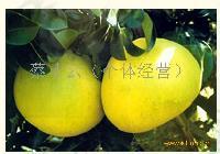 优质玉环柚子
