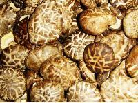 优质菌床茶花菇