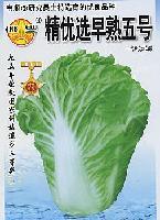 精優選早熟5號大白菜種子