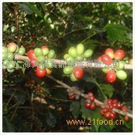 巴西生咖啡豆