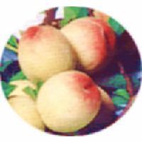 多品种罐头桃