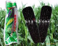 真空糯玉米