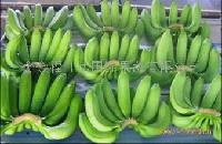 进口菲律宾香蕉