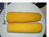 速凍黃粘玉米