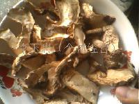 野生银盘蘑菇大虎皮