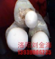 优质鲜白灵菇