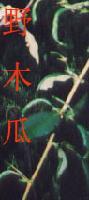 纯天然野木瓜