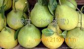 融水糯米柚(沙田柚)