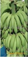 湛江特优香蕉