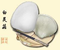 壓縮白靈菇