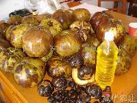 大果红花油茶种子