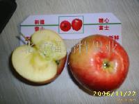 新疆阿克苏冰糖心红富士苹果