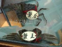 洪泽湖螃蟹