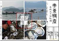 生蚝粤东太平洋牡蛎