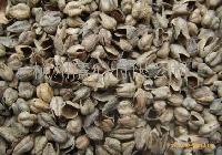 荞麦壳 buckwheat hull