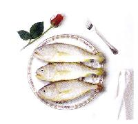海魚提取物