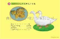 臺灣全白羽半番鴨