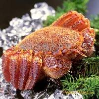 日本红毛蟹