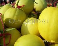 优质洋香瓜