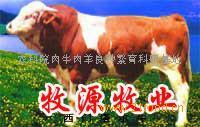 肉牛的养殖技术